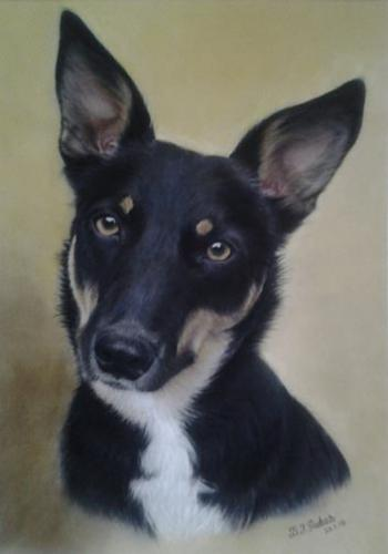 Collie cross